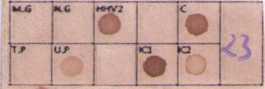 Membrana Venereas-5- STD